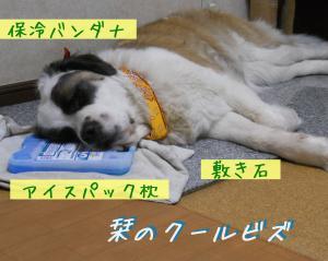 033a_convert_20110522144234.jpg