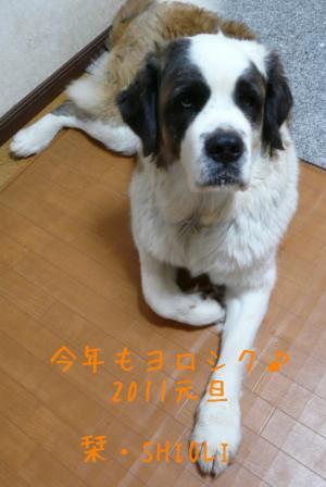 088a_convert_20110101104629.jpg