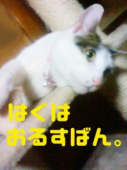 201203272348000.jpg