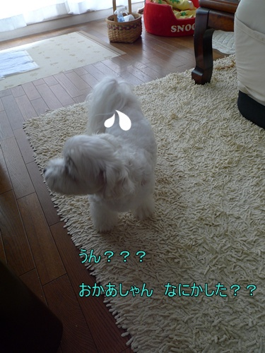 171_20091006210852.jpg