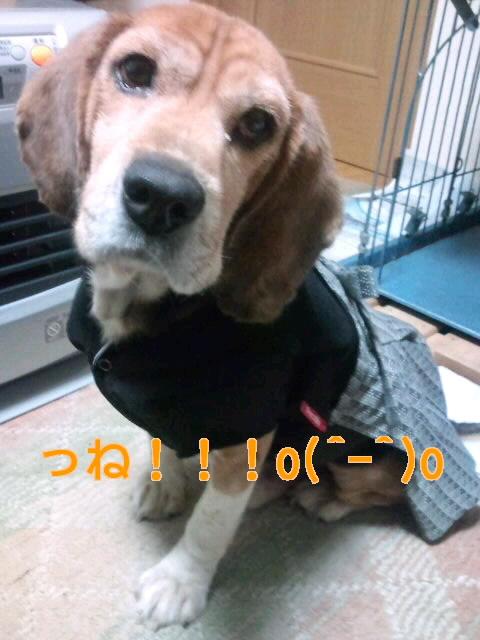 20100101180446.jpg