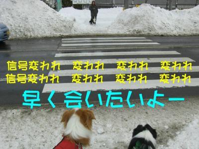 CIMG4100_sh01.jpg