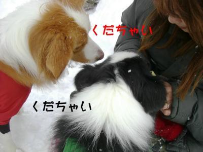 CIMG4115_sh01.jpg
