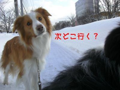 CIMG4119_sh01.jpg