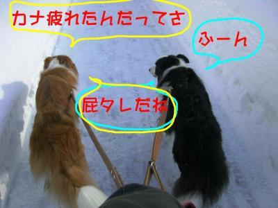CIMG4121_sh01.jpg