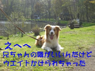 CIMG4379.jpg