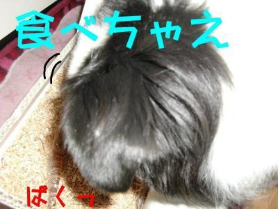 CIMG5638.jpg