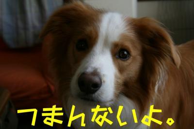 IMG_3833_sh01.jpg