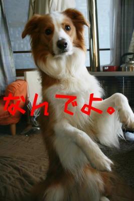 IMG_3859_sh01.jpg