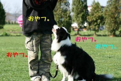 IMG_3891_sh01.jpg
