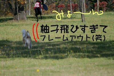 IMG_4031_sh01.jpg
