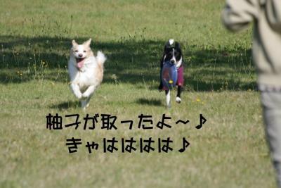IMG_4034_sh01.jpg