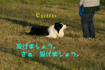 IMG_4155_sh01.jpg