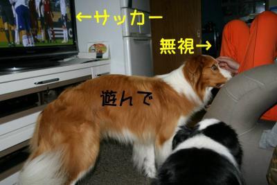 IMG_5170_sh01.jpg