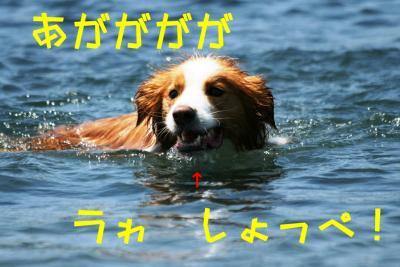 IMG_6881_sh01.jpg