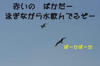 IMG_6888_sh01.jpg