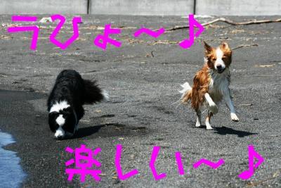 IMG_6935_sh01.jpg