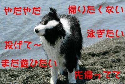 IMG_7086_sh01_20100523190209.jpg