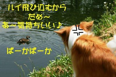 IMG_7816_sh01.jpg