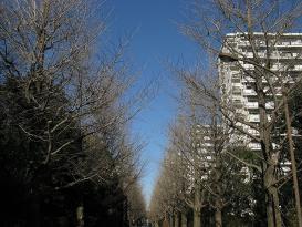 20081228_741a.jpg