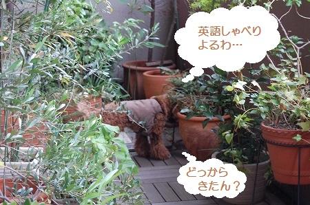 DSC_1807_20110831135336.jpg