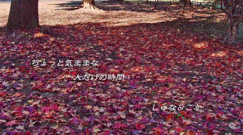 DSC04170-1-1.jpg