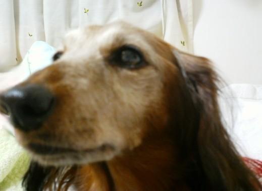 茶太郎 犬