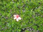 ハウスクリーニング・季節外れの花
