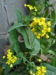 ハウスクリーニング菜の花