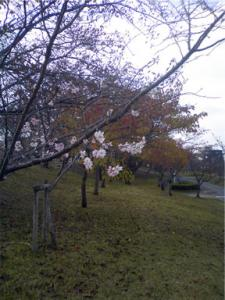 20091112-1.jpg