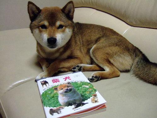 柴犬の飼育本