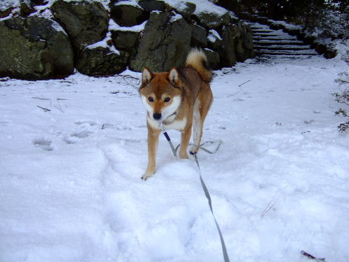 今日も雪です♪