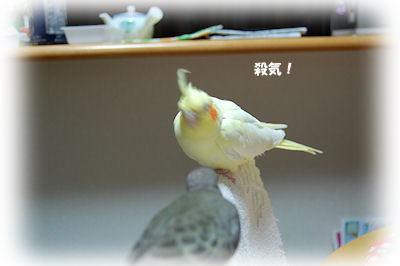20091211natu1.jpg