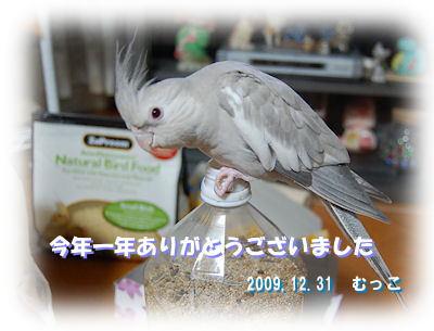 20091231rei.jpg
