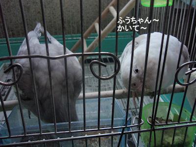 20100124chico3kega.jpg