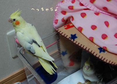20100527hina.jpg