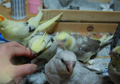 20100602hinahina2.jpg