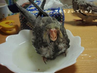 20100616nana2gomizuabi.jpg