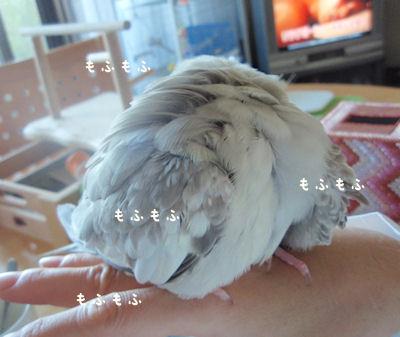 20101001daruma.jpg