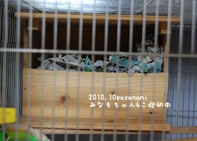 サザナミ巣箱