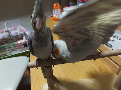 20110612hinahina2.jpg