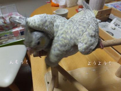 20110612hinahina3.jpg