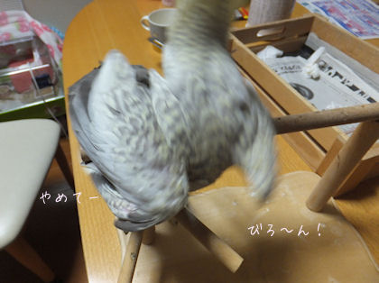 20110612hinahina4.jpg