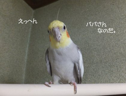 20110612konoha.jpg