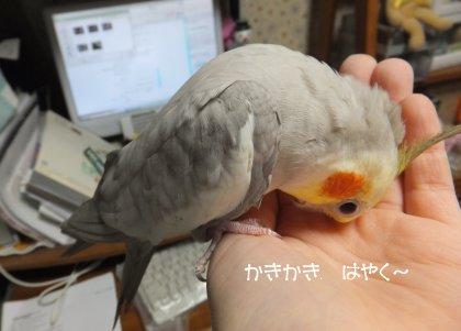 20110612konoha2.jpg