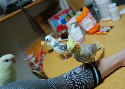 20110614temari.jpg