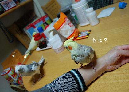 20110614temari2.jpg