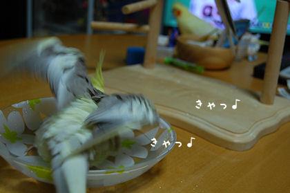 20110614temari3.jpg