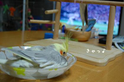 20110614temari4.jpg