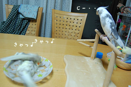 20110614temari5.jpg